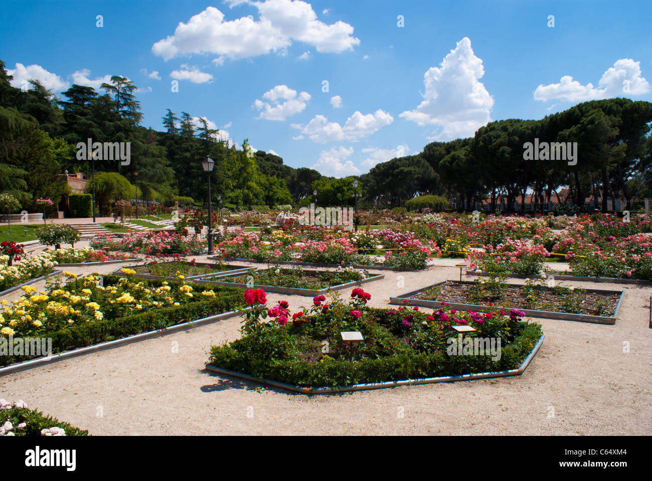 Un giardino di rose per le mamme amici in fiore