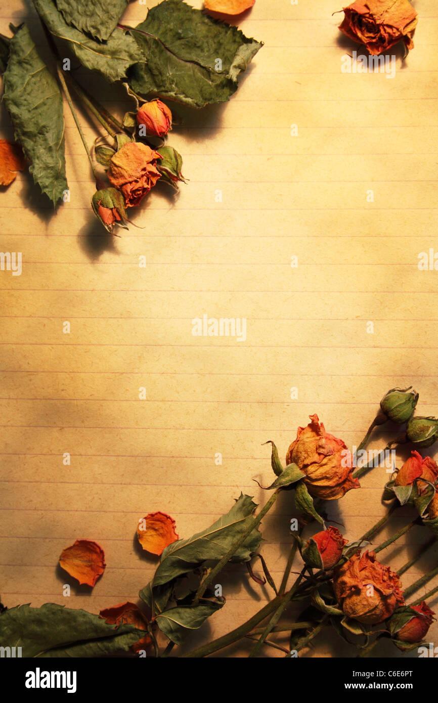 Foglio di carta bianco, incorniciato fiori secchi Immagini Stock