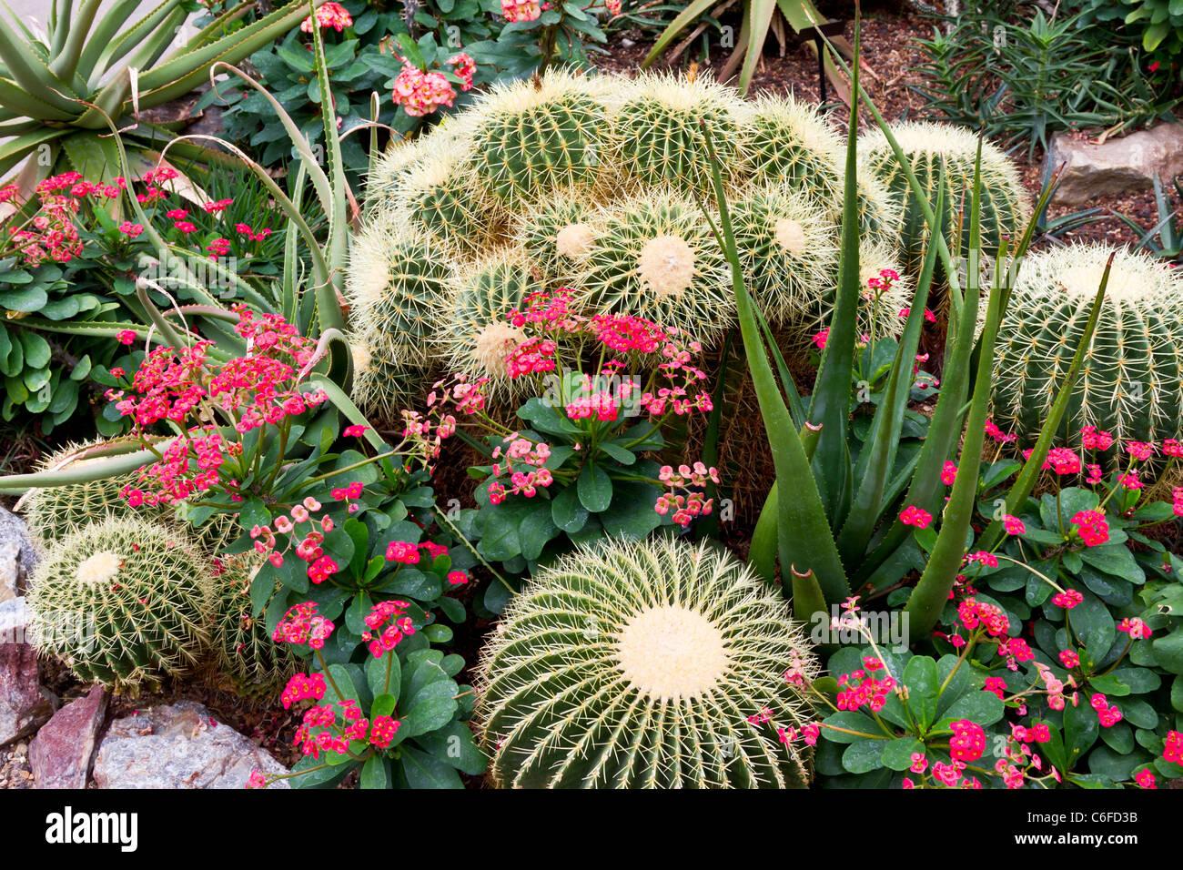 Cactus e piante succulente giardini in Chicago Giardini Botanici, Chicago, Illinois, Stati Uniti d'America. Immagini Stock