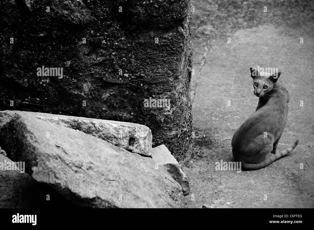 Santo Stefano di Sessanio, Italia, Aprile 2009. Resti di L'Aquila terremoto. Cat Immagini Stock