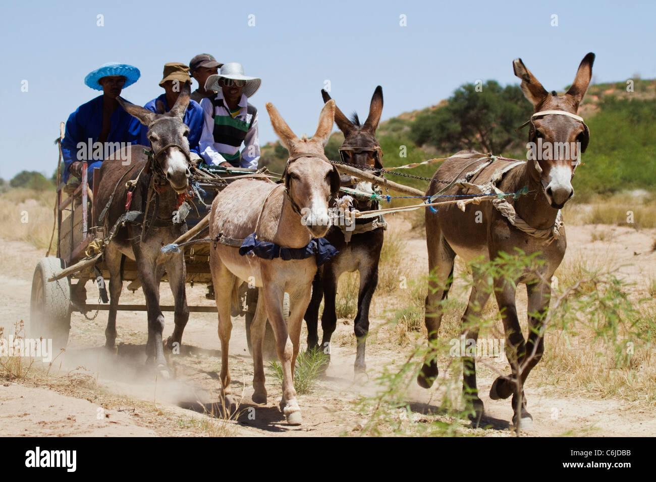 Carrello asino su una pista sterrata nel Kalahari Immagini Stock