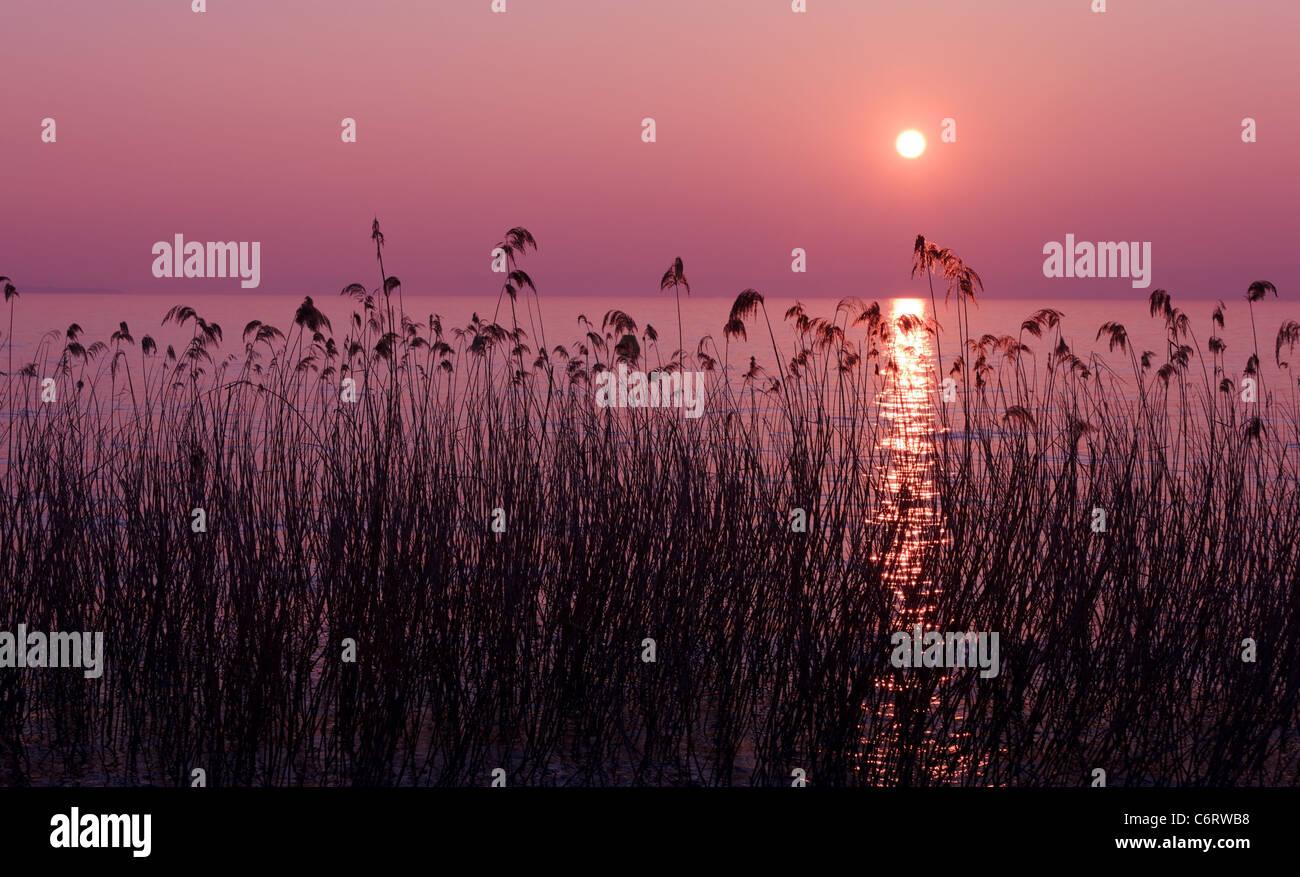 Viola tramonto sul lago con sagome reed Immagini Stock