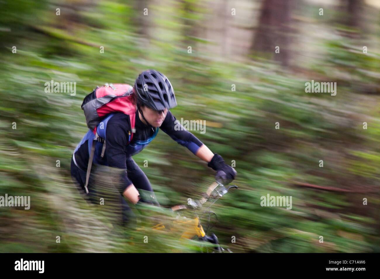 Una donna si snoda attraverso una singola traccia mountain bike trail. Immagini Stock