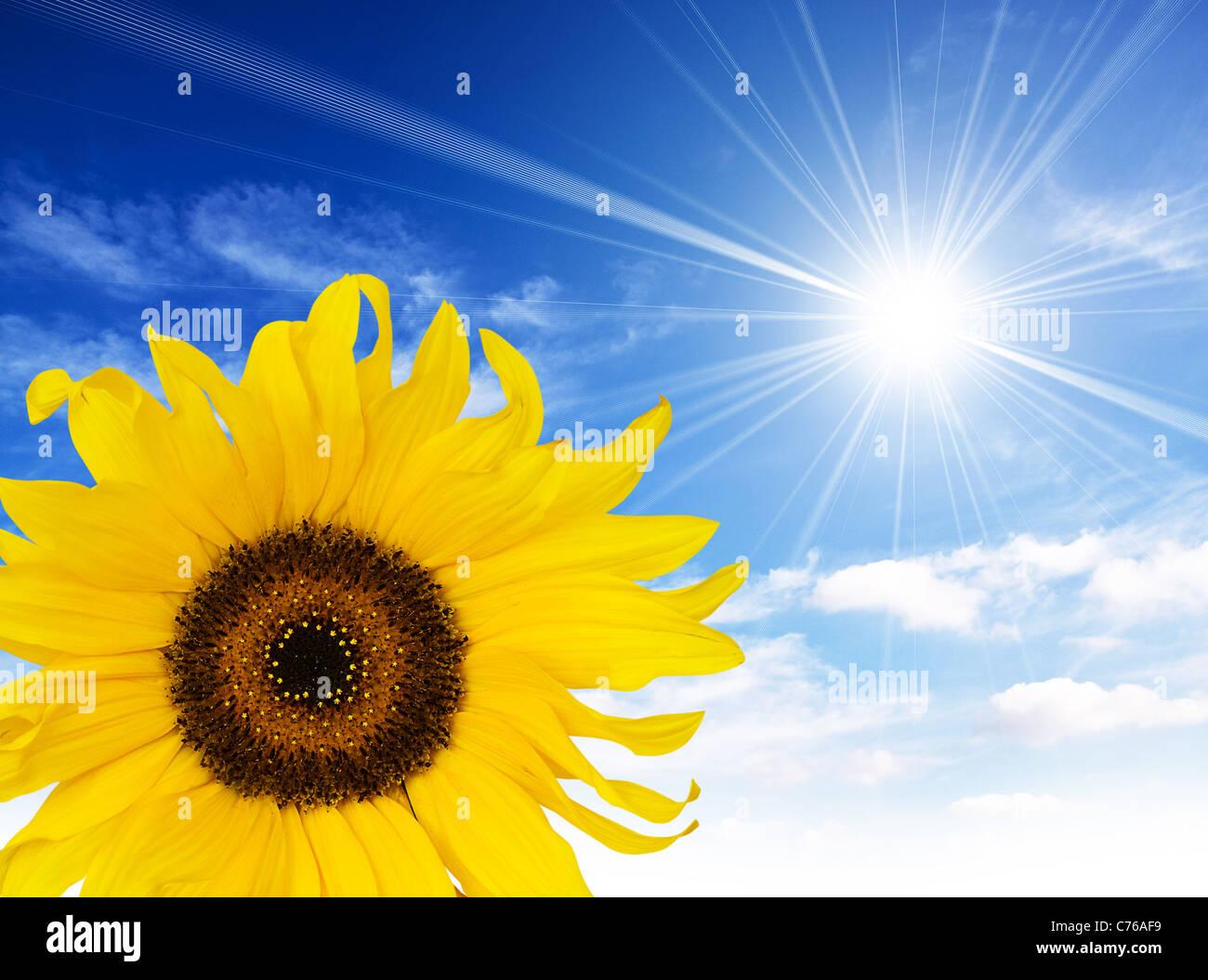 Sole di semi di girasole Immagini Stock