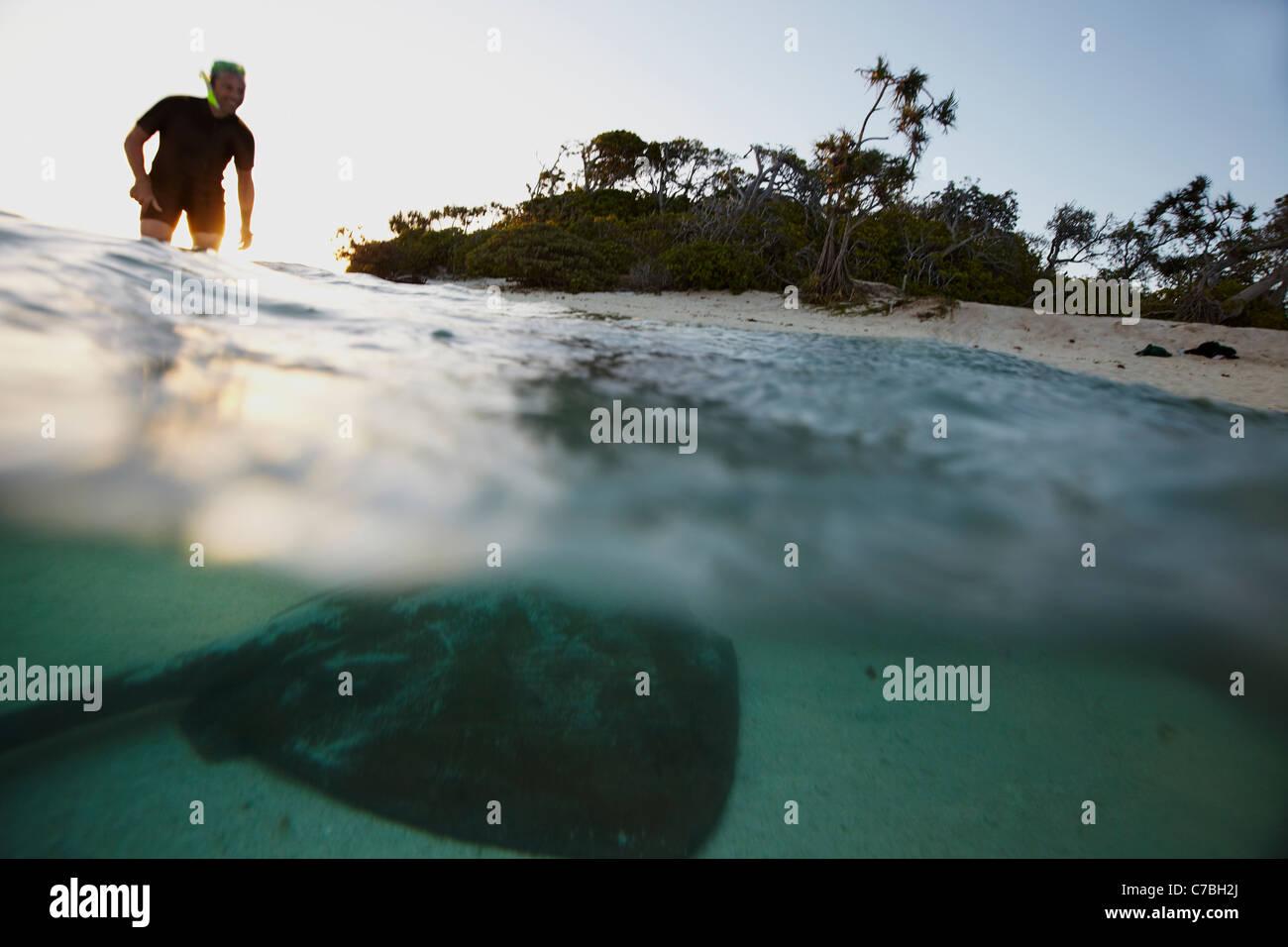 Snorkeler e stingray tardo pomeriggio vicino l'Isola Heron parte orientale è parte della Capricornia Cays Immagini Stock