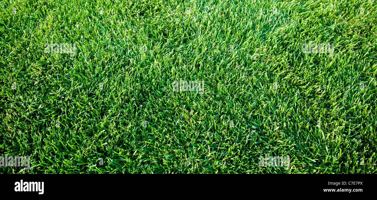 Immagine ravvicinata di molla di fresca erba verde. Immagini Stock