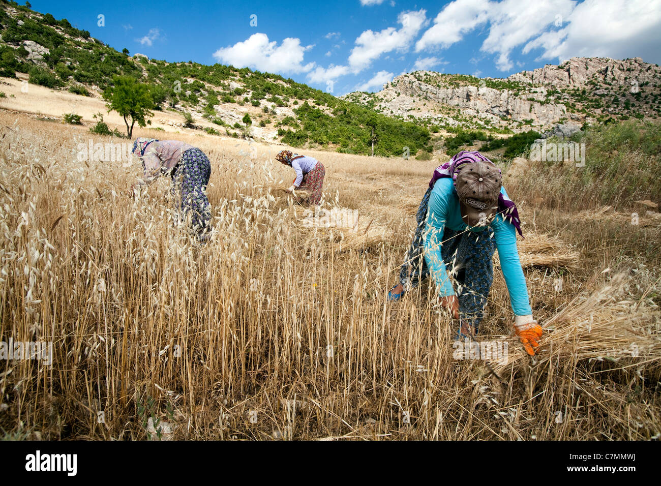 Le donne la raccolta di orzo in Antalya Gündoğmuş Turchia Immagini Stock