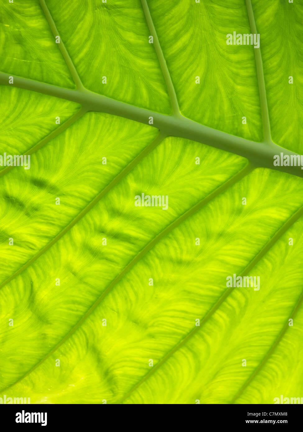Verde foglia Immagini Stock