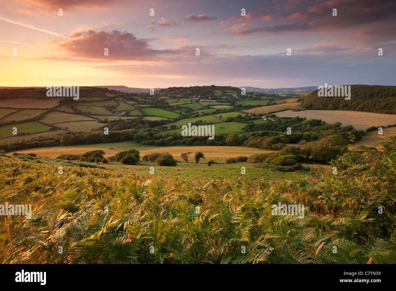 La laminazione di campagna del Dorset visto dal Golden Cap, Dorset, Inghilterra. In estate (Luglio) 2011. Immagini Stock