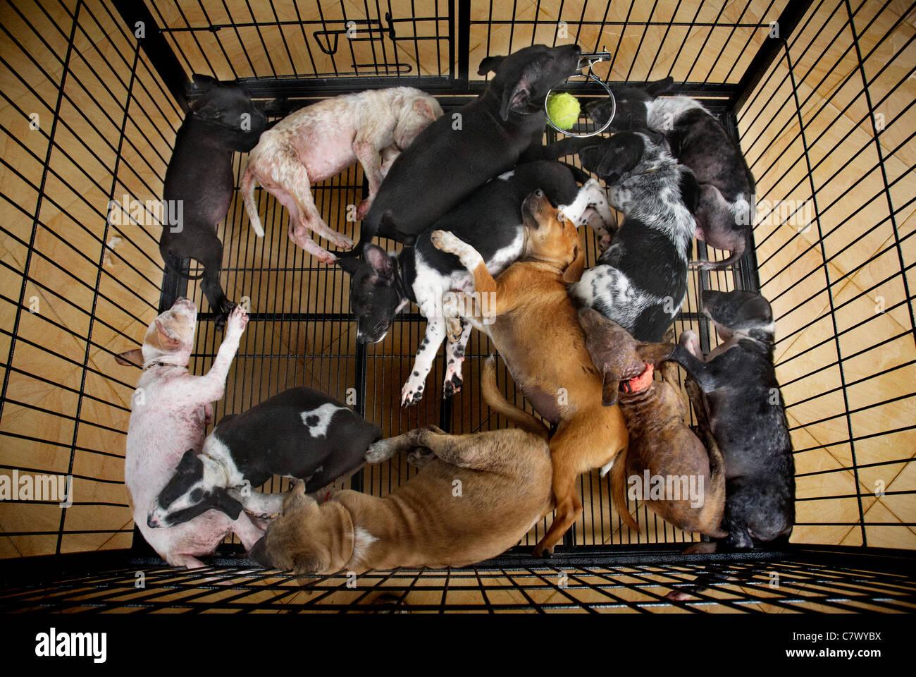 Cuccioli indesiderati a BAWA il benessere degli animali, Bali Indonesia Immagini Stock