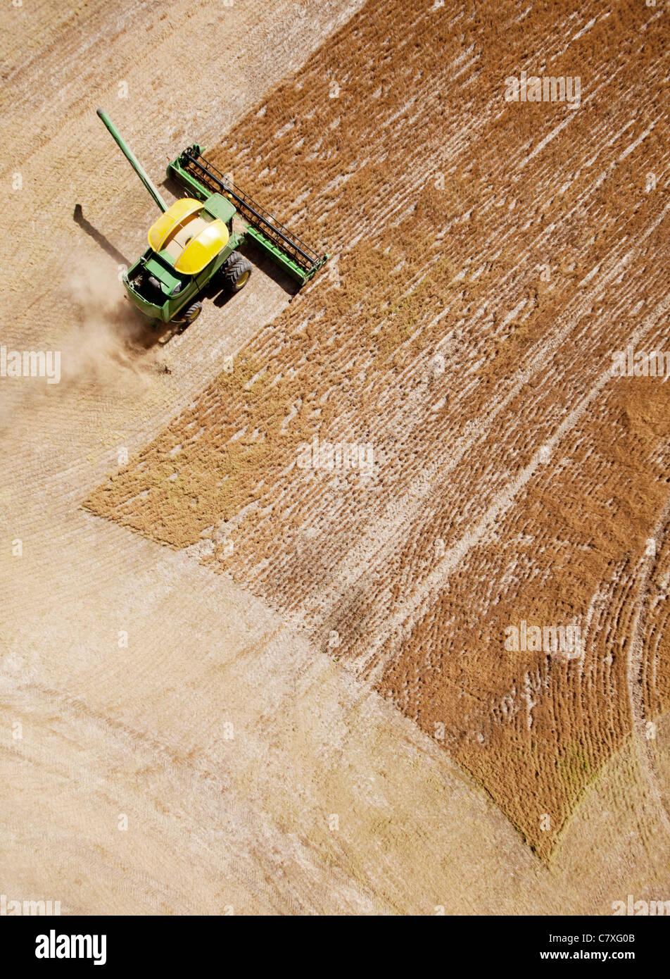Mietitrice verde combinando un campo di lenticchie nella prateria Immagini Stock