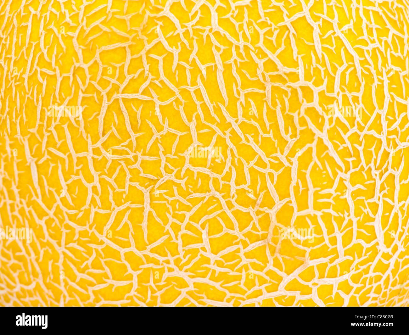 Il melone Cantalupo Texture Immagini Stock