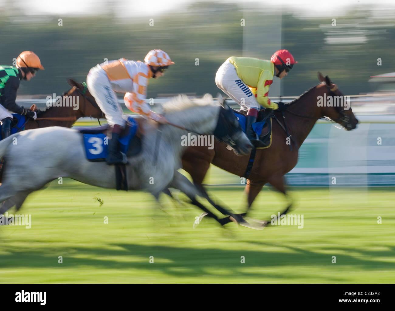 Corse di cavalli Gruppo di cavalli racing UK Immagini Stock