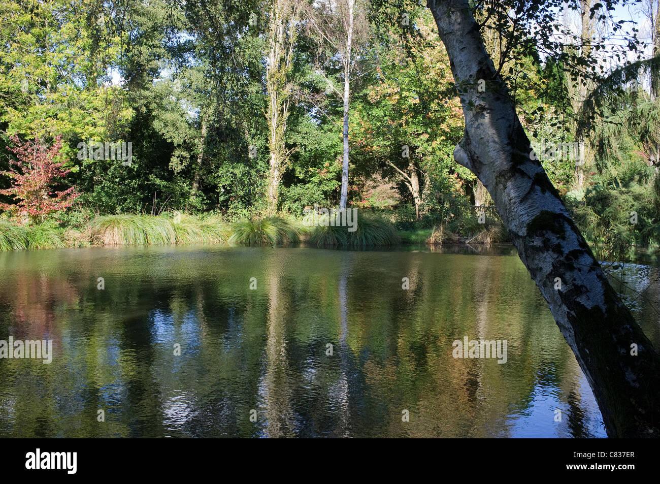 Riflessioni Lago Windlesham Arboretum -3 Immagini Stock