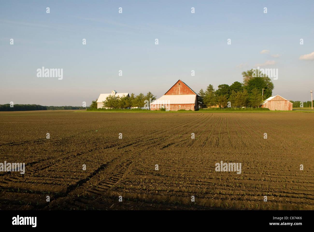 Edifici agricoli e prairie, vicino a Champaign Urbana, Illinois, Stati Uniti d'America Immagini Stock