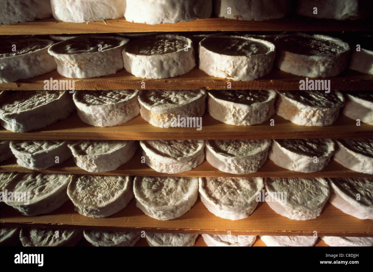 La stagionatura Camemberts Foto Stock