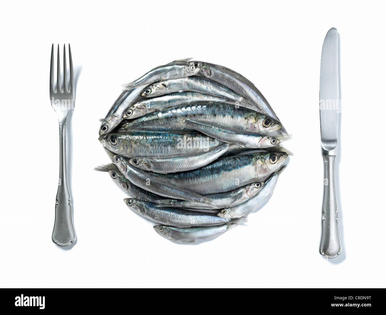 Materie di sardine nella forma di una piastra con coltello e forchetta Immagini Stock