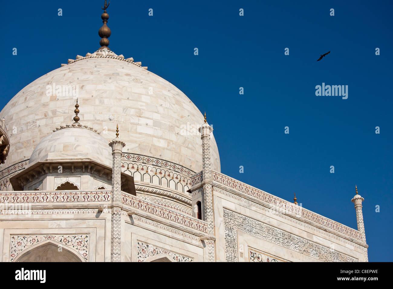 Il Taj Mahal mausoleo con gli uccelli di volare intorno alla cupola, southern visualizza dettagli, Uttar Pradesh, Immagini Stock