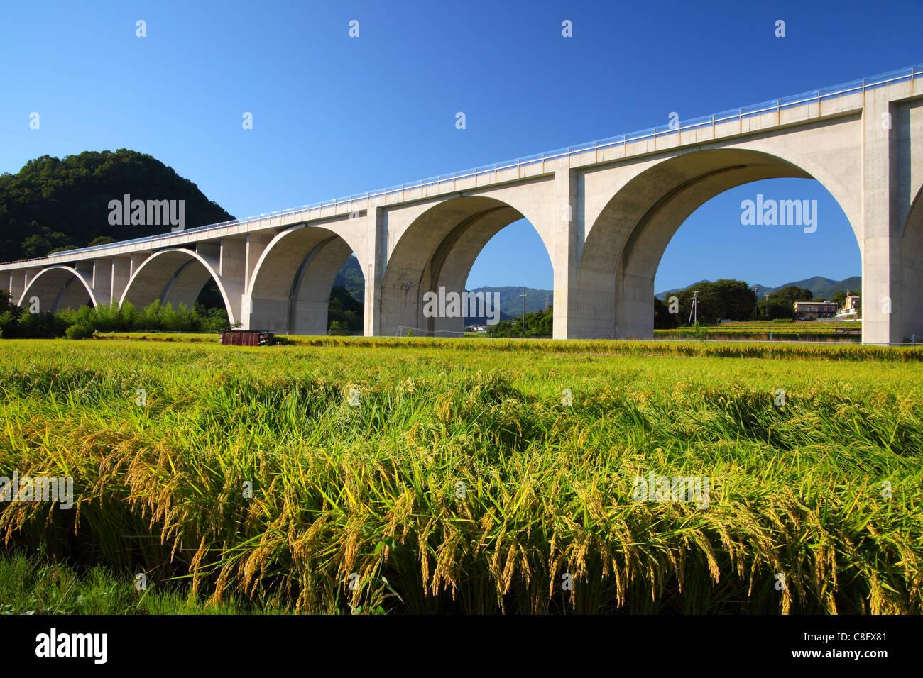 Ponte dell'autostrada con campo di riso Immagini Stock