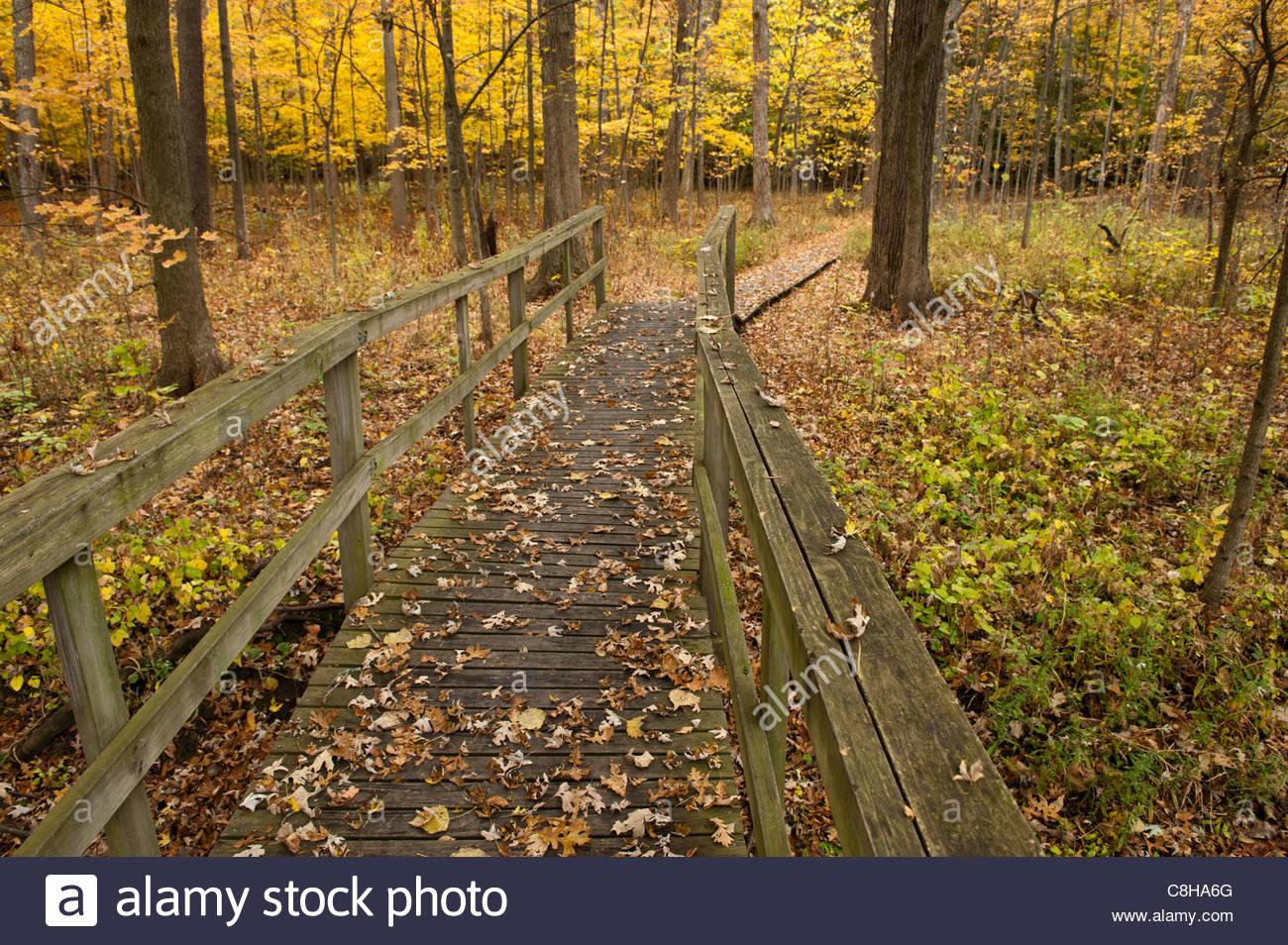 Lascia raccogliere su un ponte di Ryerson boschi in Illinois. Immagini Stock