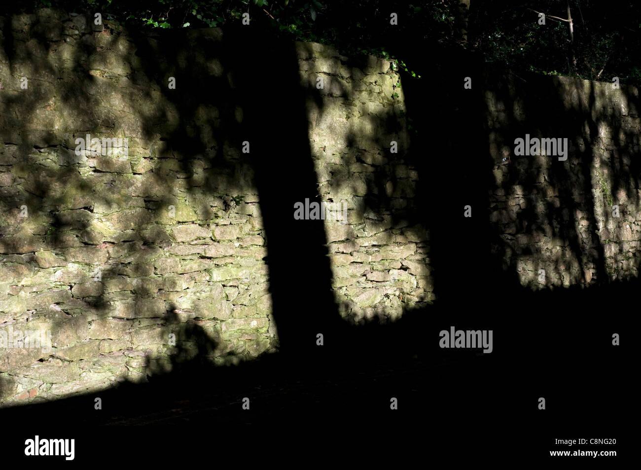 Ombra di alberi che rientrano sul muro di pietra,sfondo,ombre,primo pomeriggio, esterna, giardino, Hawaii, foglie, Immagini Stock