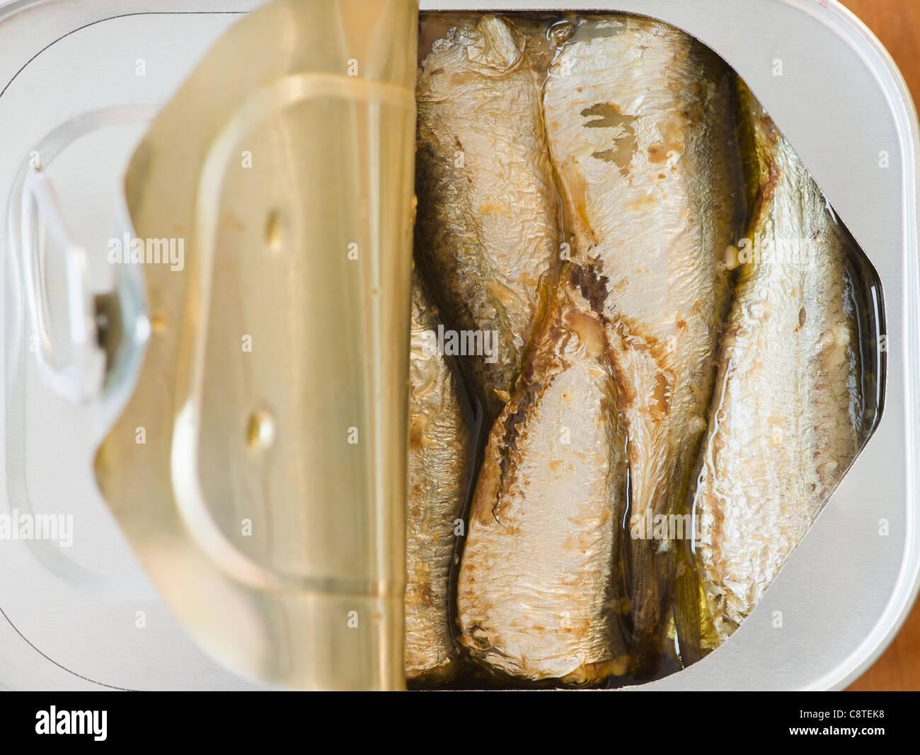 Close up di sardine in can Immagini Stock