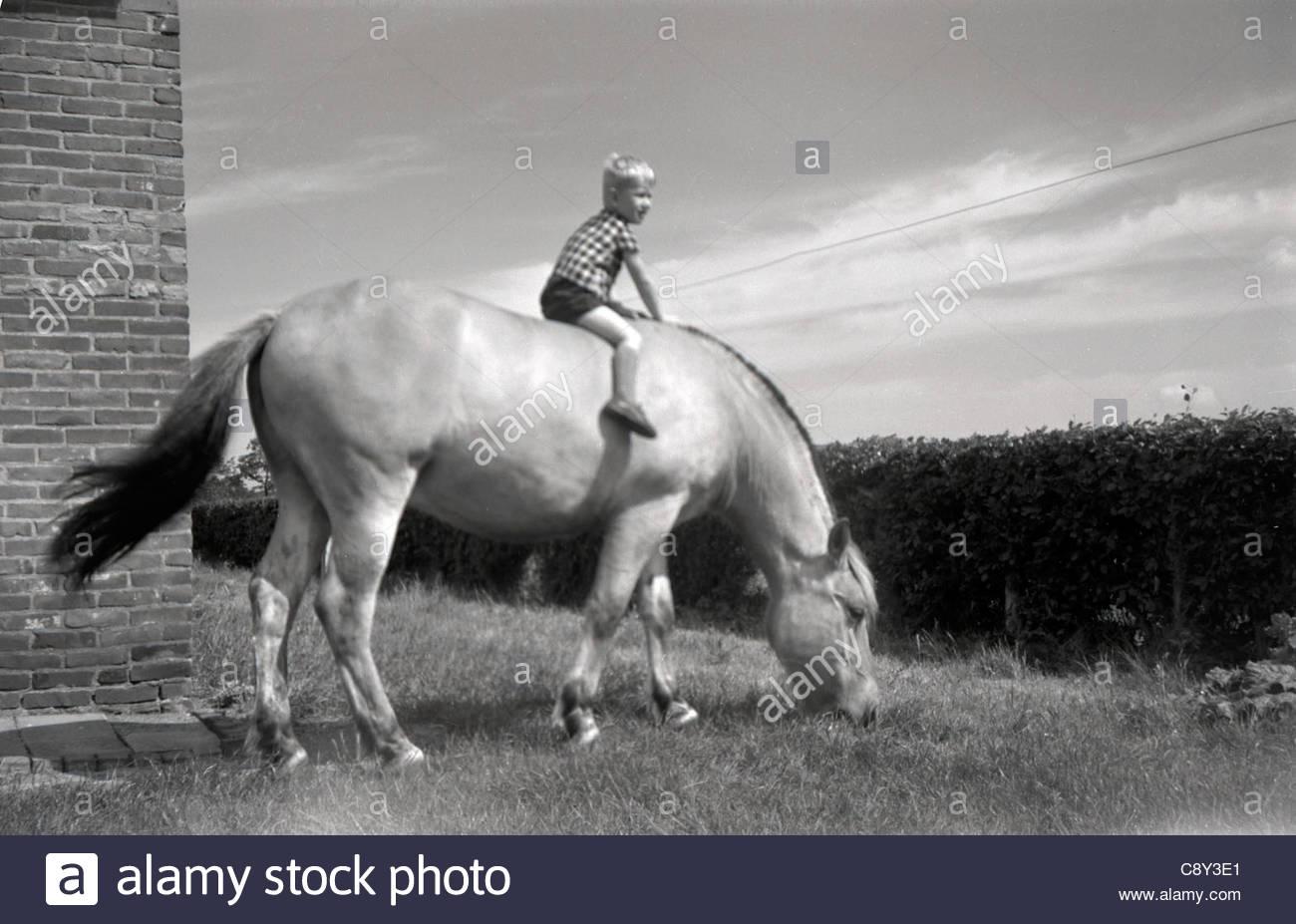 Un piccolo ragazzo seduto sul dorso di un cavallo grande Olanda 1960s Immagini Stock