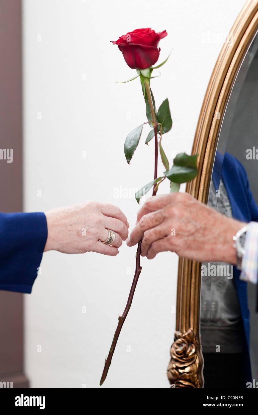 Un vecchio uomo dà una rosa di una vecchia donna Foto Stock
