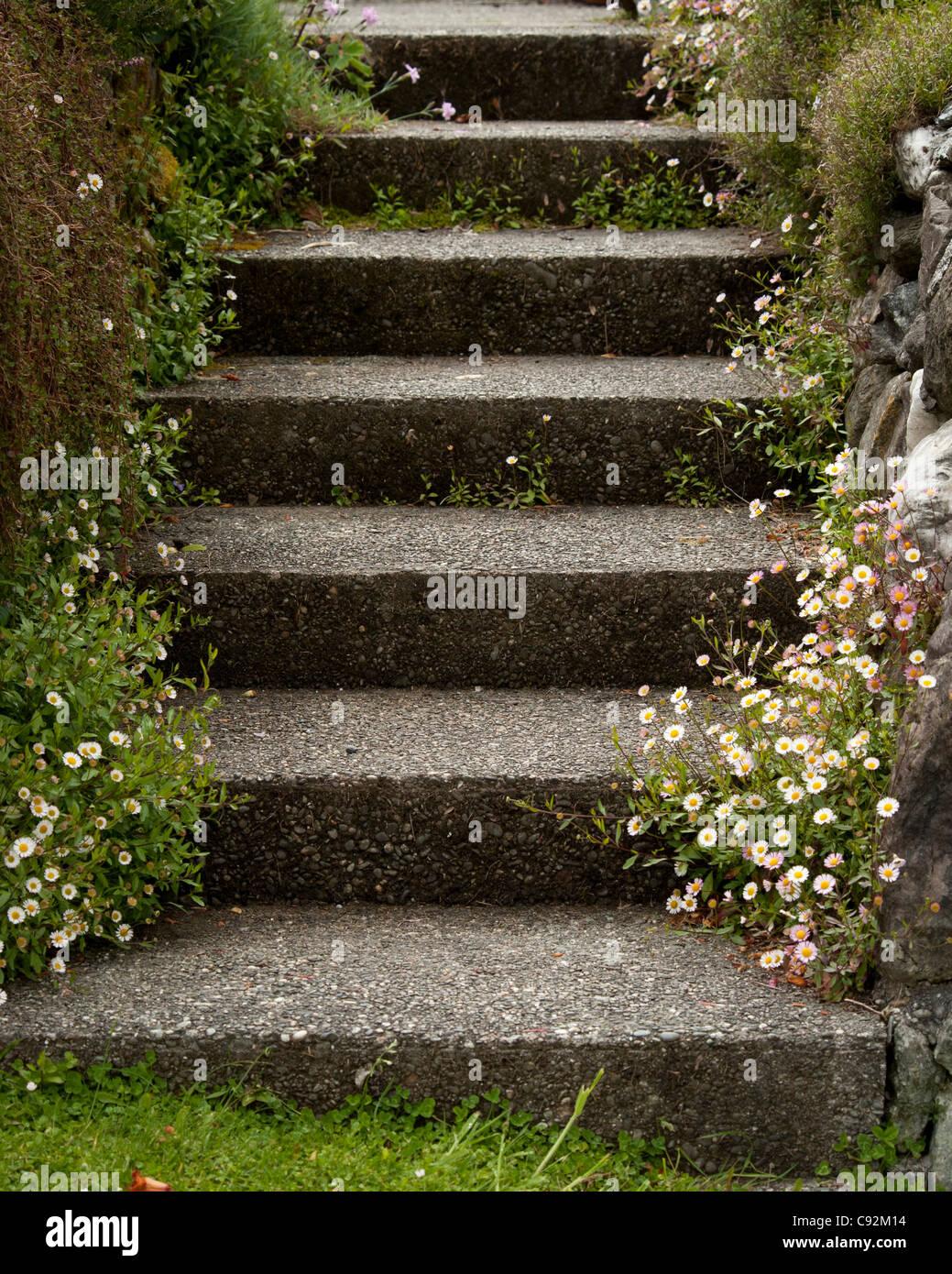 Passi circonda da fiori e rocce Immagini Stock
