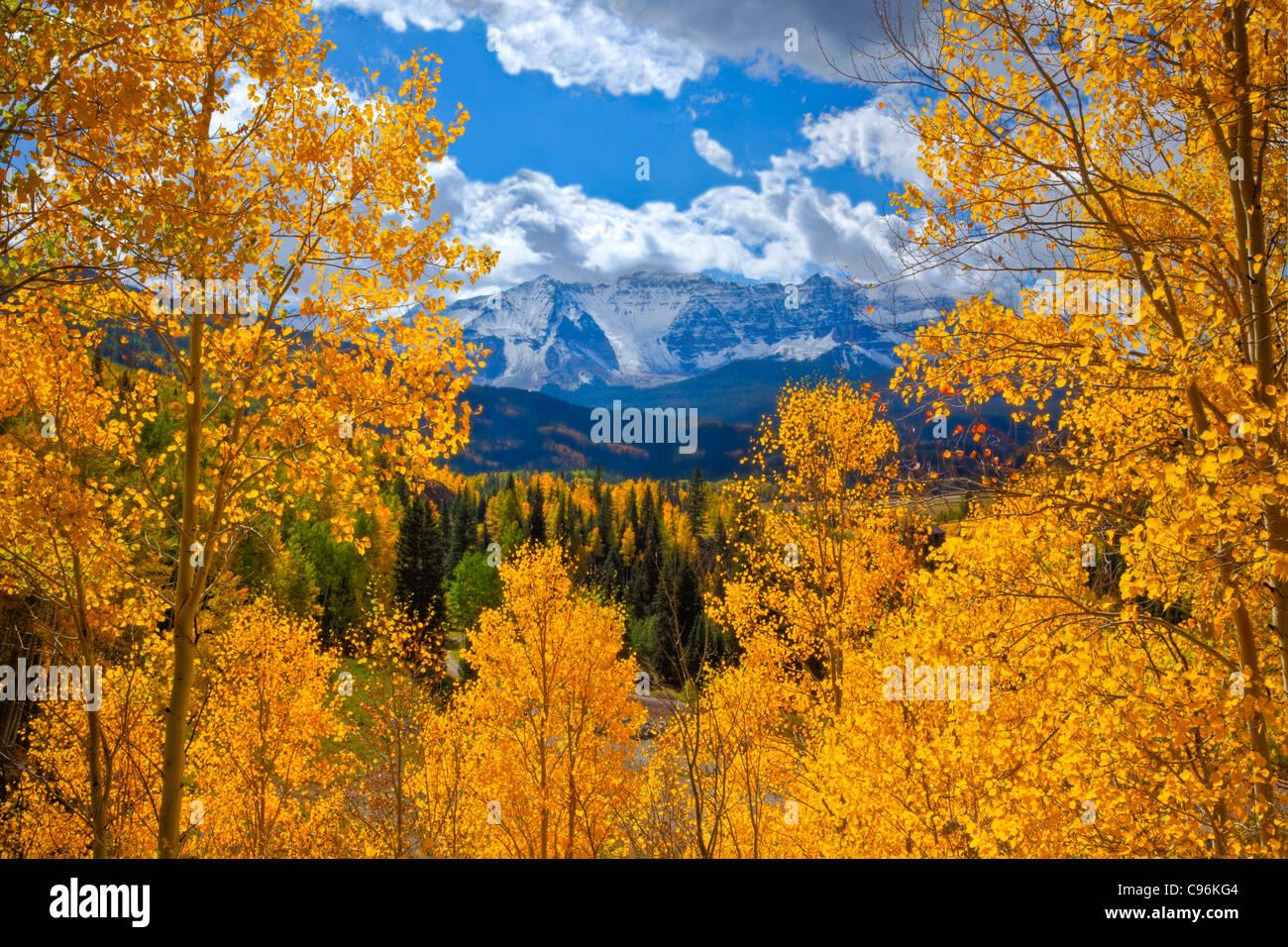 Aspens vicino Lago di trote, Uncomphagre National Forest, Colorado montagne San Juan Populus tremuloides Immagini Stock