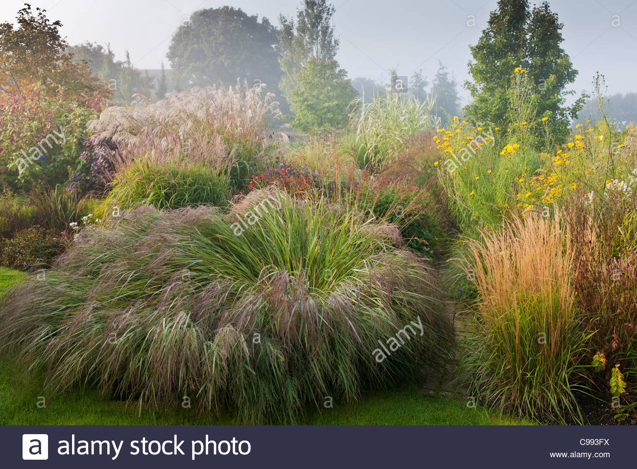 Marchants sussex inizio autunno cadere le frontiere piante for Piante ornamentali perenni