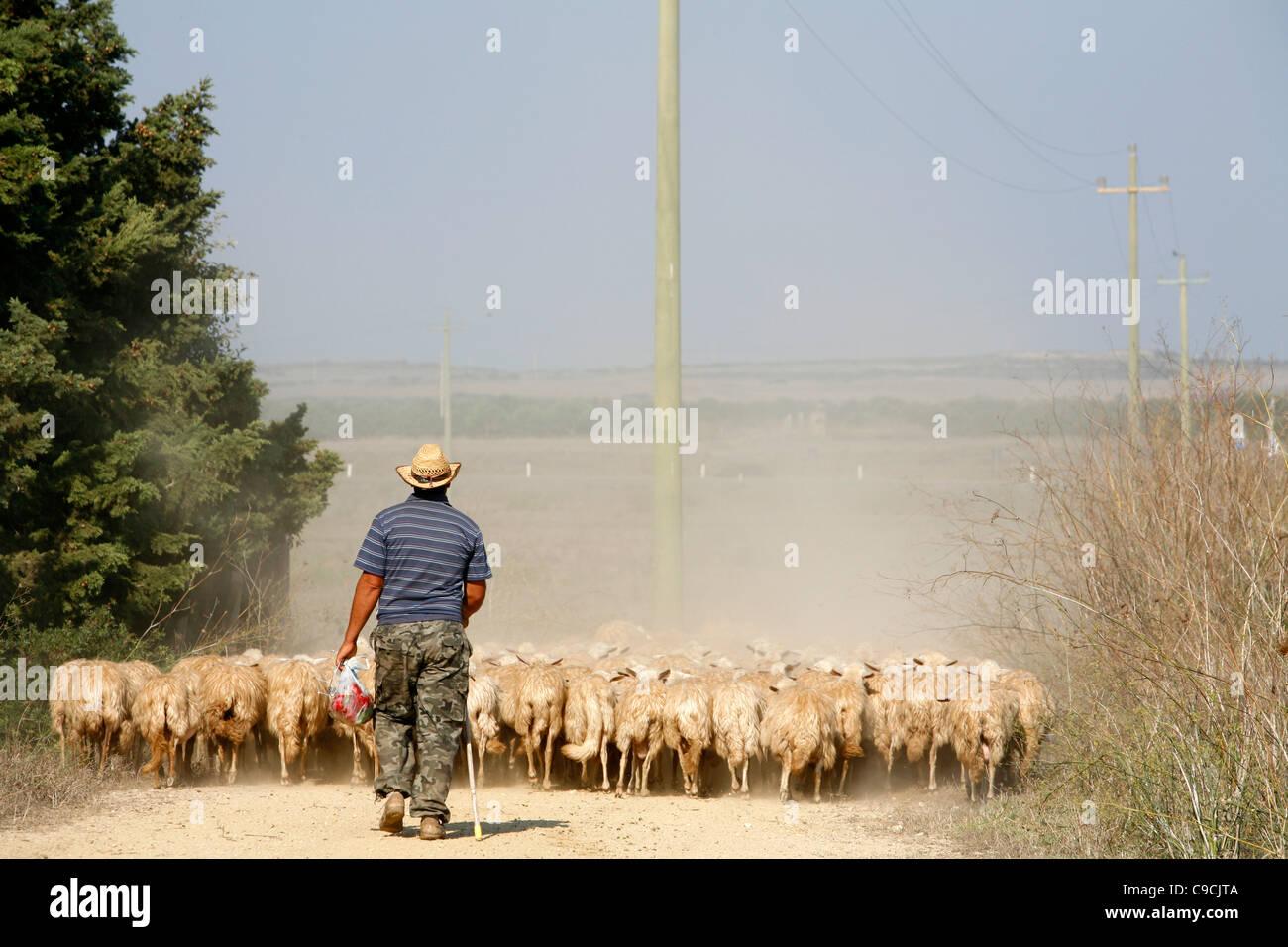 Pecore herder nel west coast ,Sardegna, Italia. Immagini Stock