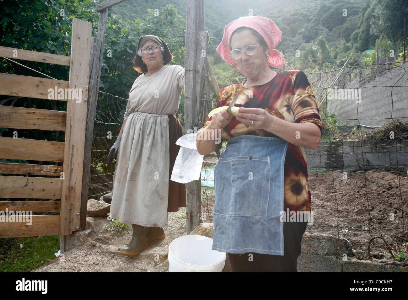 Le donne con il tradizionale costume lavorando in un campo vicino a Talana villaggio nella regione del Gennargentu, Immagini Stock