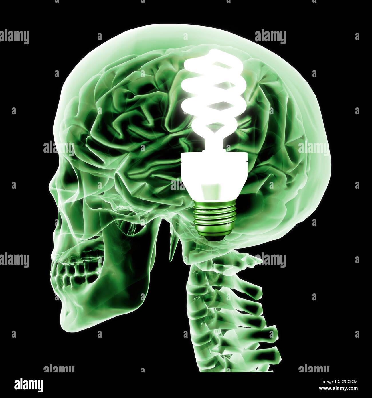 Cervello con luce verde della lampadina, in modo digitale immagine generata da Hank Grebe Immagini Stock