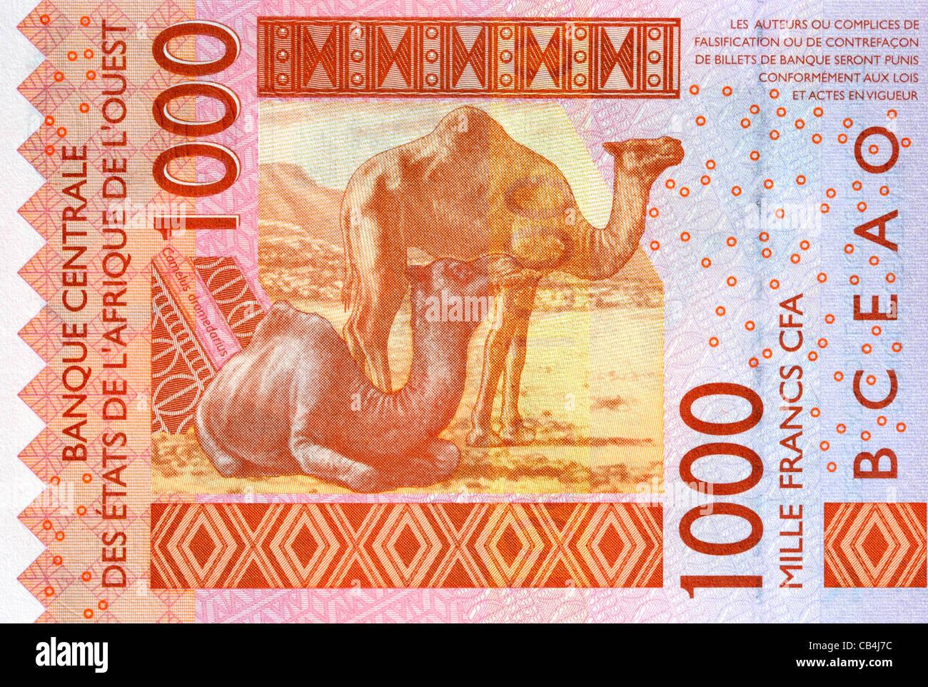 Senegal 1000 Mille Franc Bank nota. Immagini Stock