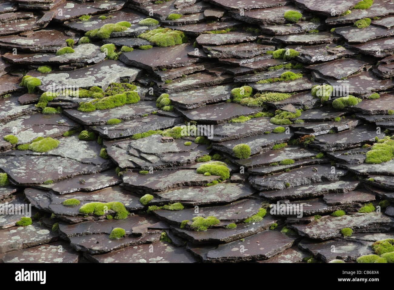 Tetto in ardesia piastrelle di pietra con muschi e licheni sul