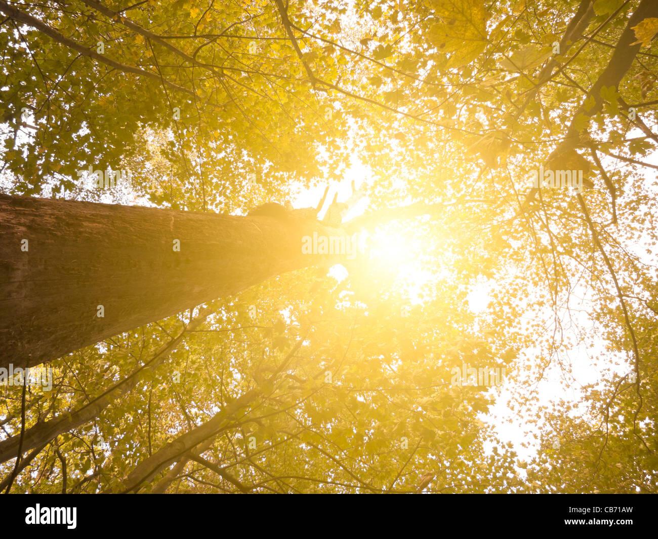 Sun attraverso la foresta Immagini Stock