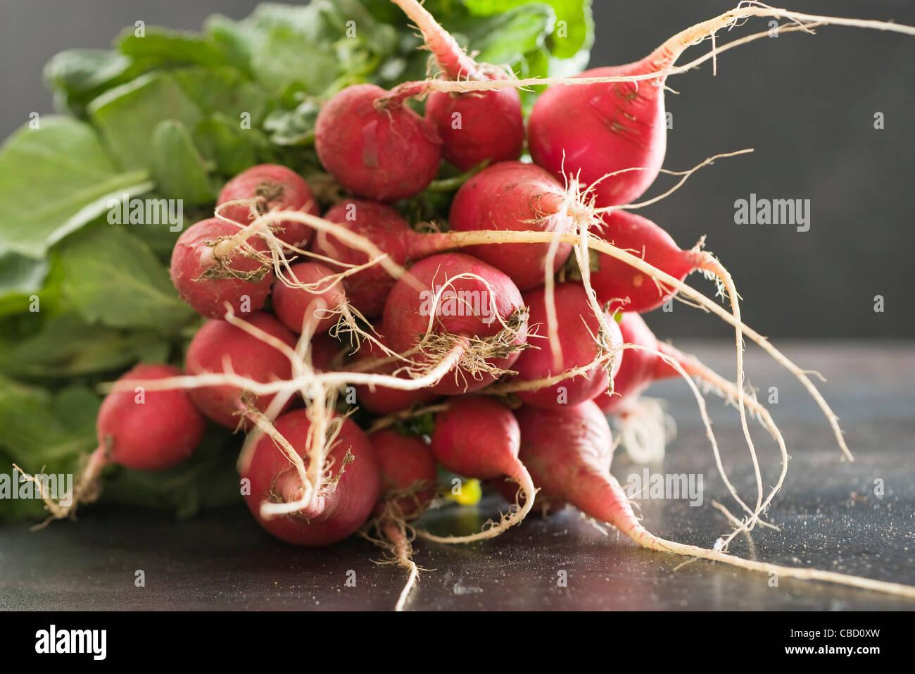 Mazzetto di ravanelli freschi Immagini Stock