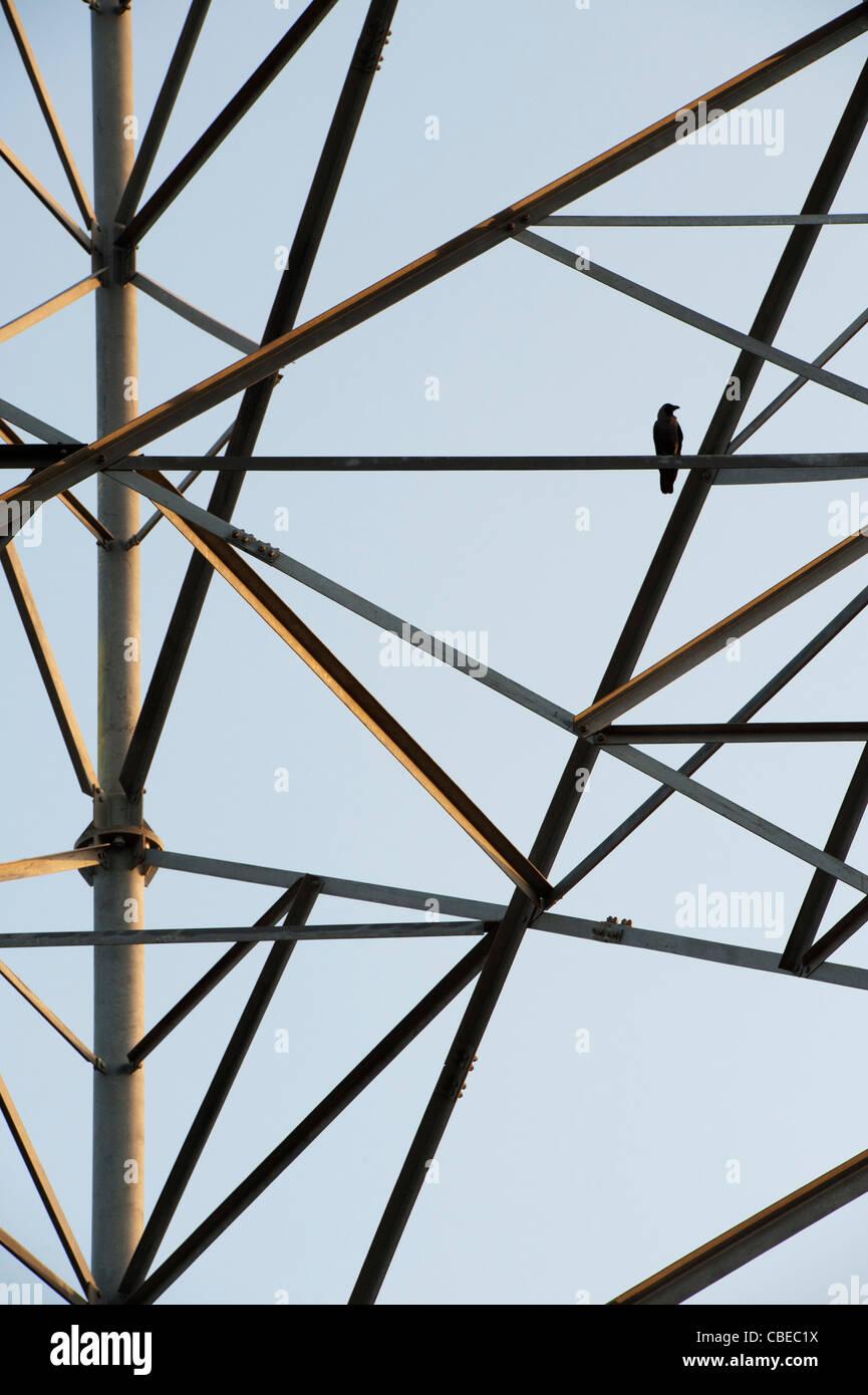 Bird seduto su un Indian telecommunications tower astratta. India Immagini Stock