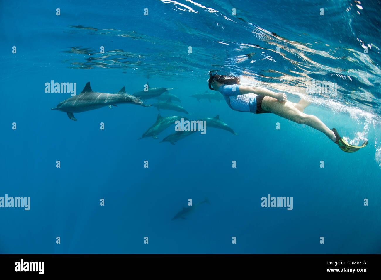 Lo snorkeling con Spinner Delfini Stenella longirostris, Shaab Rumi, Mar Rosso, Sudan Immagini Stock