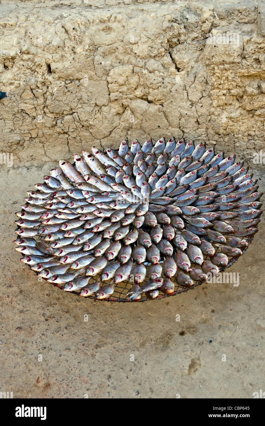 Il pesce in vendita in strada; Mopti, Mali, Africa occidentale Foto Stock