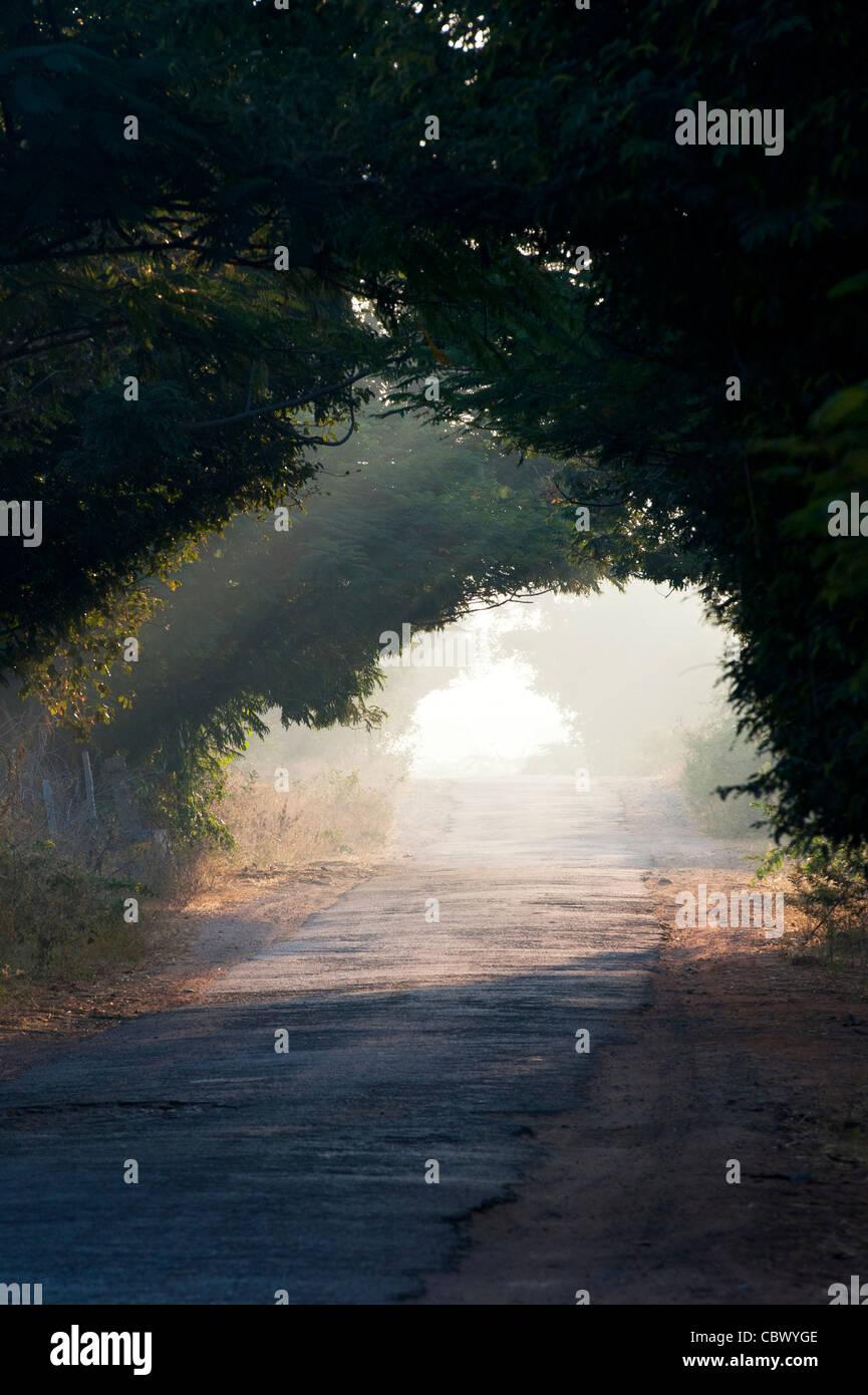 Tunnel di alberi nella campagna indiana. Andhra Pradesh, India Immagini Stock