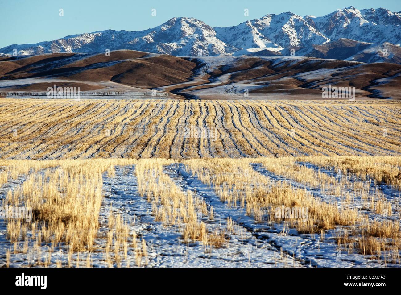 Prima neve sui campi e sulle montagne Foto Stock