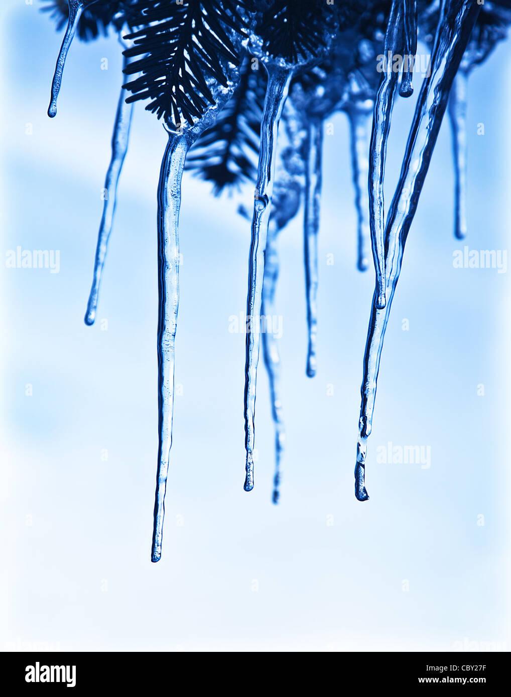 Ghiaccioli sul ramo di albero, blu acqua congelata, ghiaccio invernale, meteo outdoor presso la stagione invernale Immagini Stock
