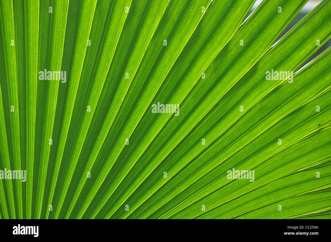Fresca foglia verde Immagini Stock