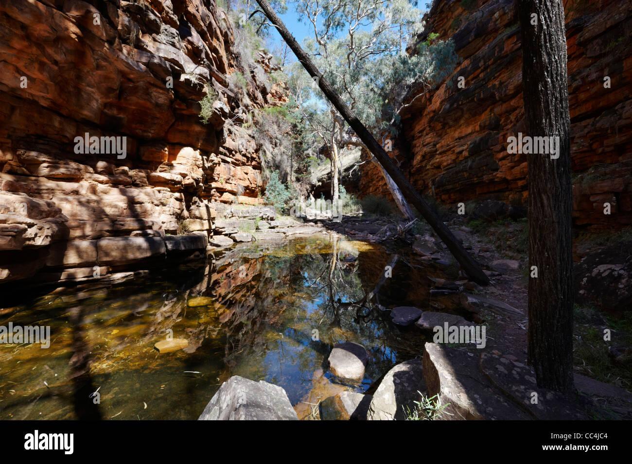 Vista di alberi e fiume nel canyon, Alligator Gorge, Mount Remarkable National Park, Sud Australia, Australia Foto Stock