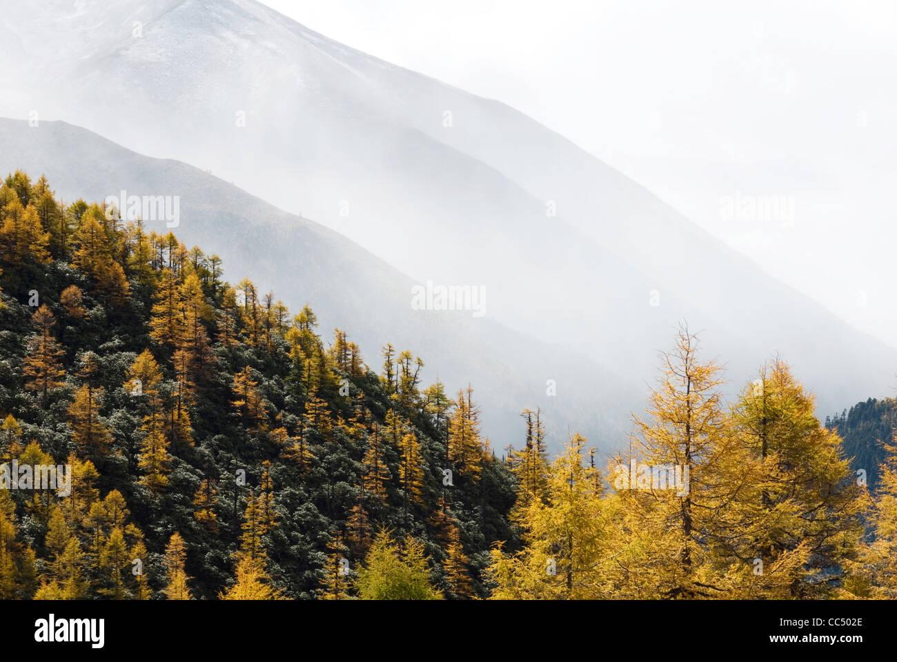 Bosco in montagna accanto a Bita Lake, Shangri-la, DiQing tibetano prefettura autonoma, Yunnan , Cina Immagini Stock
