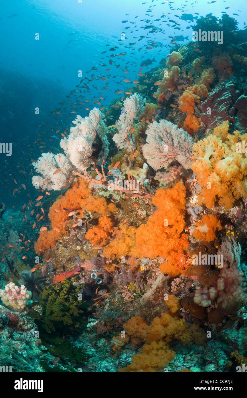 Coral reef paesaggi con gorgonie e coralli molli Rinca Parco Nazionale di Komodo Indonesia. Immagini Stock