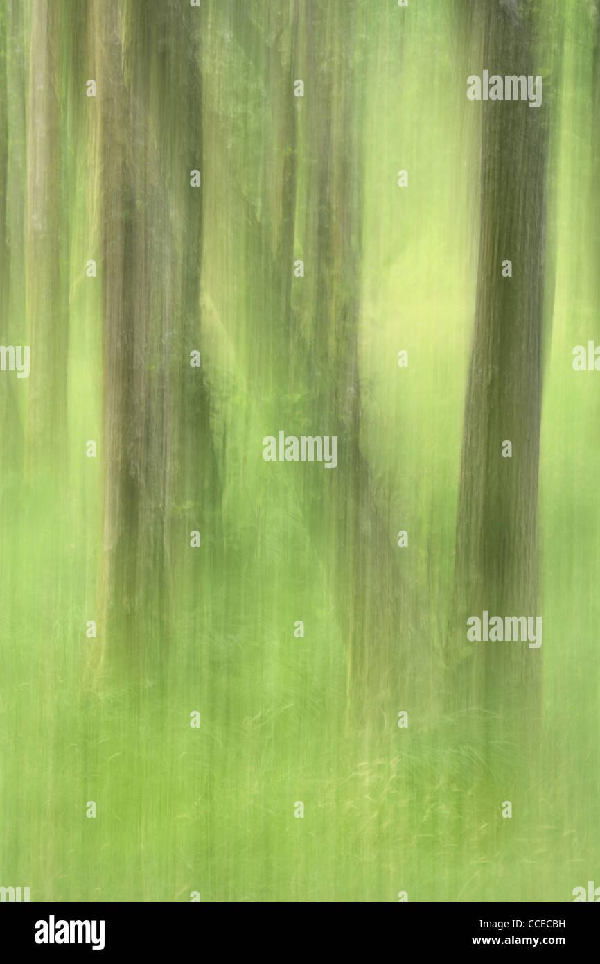 Intenzionale di movimento della telecamera rende astratta immagine di alberi in Glen Nevis, Scozia Foto Stock