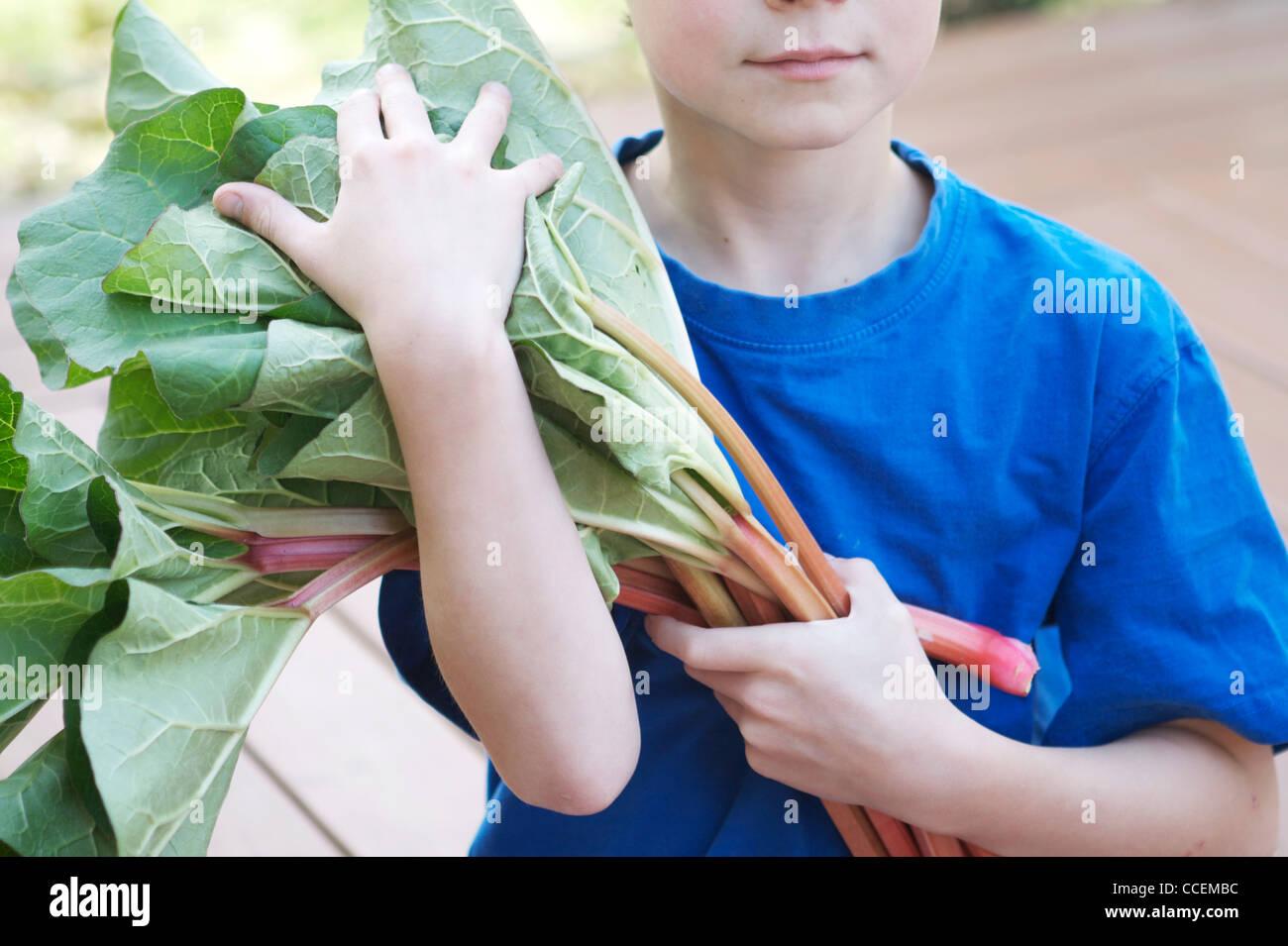 Un giovane bambino azienda appena raccolte rabarbaro organico dal suo giardino. Ingrediente perfetto per un sano, Immagini Stock